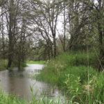 McCarthy Creek WMSWCD